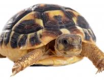 Террариум для черепахи.