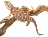 Террариум для ящерицы