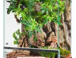 Пантеровый хамелеон (взрослый 38см.)