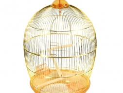 Карликовая сова