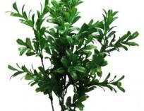 Искусственное растение, Лигастер, 30 см.
