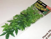 Шелковое растение с присоской ABUTILON PLANT . 38см.
